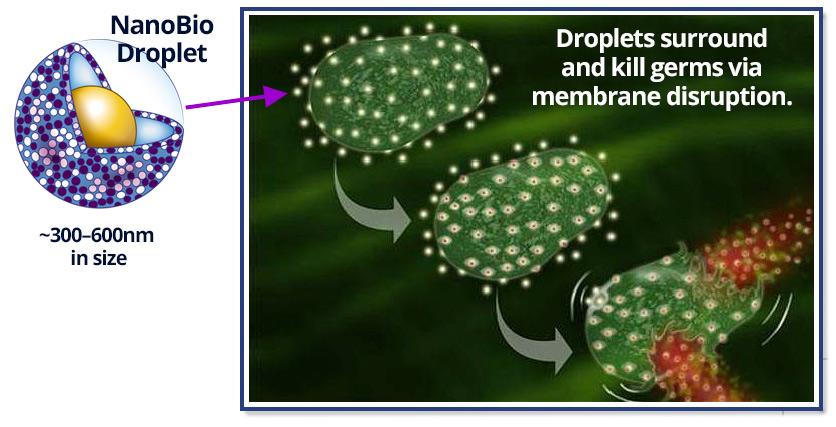 NNoBio Protect kills germs via membrane disruption